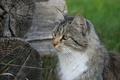 Картинка кошка, животное, деревня, кошки, природа, изба, обои