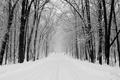 Картинка дорога, снег, лес