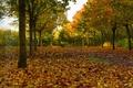 Картинка аллея, деревья, осень, листья