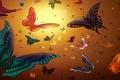Картинка цвет, рисунок, свет, крылья, полет, бабочки, насекомые