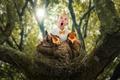 Картинка птенцы, The bird choir, ребёнок, гнездо