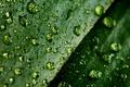 Картинка макро, листок, капли воды, macro, water drops, 4224x2376, leaflet