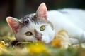 Картинка кошка, лето, фон
