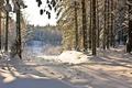 Картинка тропинка, деревья, снег, лес, зима