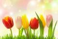 Картинка блики, трава, тюльпаны