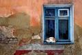 Картинка Стена, окно, кошак, разруха