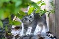 Картинка испуганный, трава, серый, малыш, котёнок