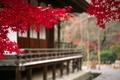 Картинка дерево, япония, ветвь, осень, пейзаж, листья