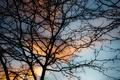 Картинка ветка, мягкий свет, ветвь, закат . синий, небо, закатное небо, облака