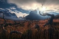 Картинка Патагония, горы, обои от lolita777, коряги, ламы, солнце, небо, трава, Анды