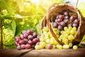 Картинка грозди, корзина, виноград, листья