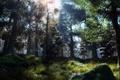 Картинка солнце, деревья, мох, камни, лес