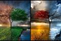 Картинка дерево, природа, времена года, природная красота, место