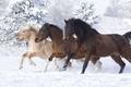 Картинка кони, лошади, снег, зима