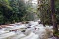 Картинка поток, лес, река
