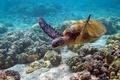 Картинка Черепаха, океан, кораллы