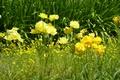 Картинка flowers, roma, italia