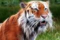 Картинка Зверь, обработка, тигр