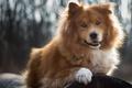 Картинка природа, собака, мохнатый, щенок, бревно, порода, боке