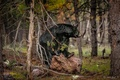 Картинка медведь, барибал, чёрный медведь, лес