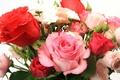 Картинка цветы, flowers, красивая, Букет из роз, Bouquet of roses, beautiful