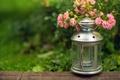 Картинка цветы, фонарик, размытость, свеча, зелень, розовые, фонарь, трава