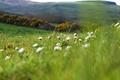 Картинка цветы, макро, холмы, природа, растения, поляна, размытость, ромашки, зелень, поле, лето, трава, весна