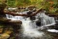 Картинка камни, пороги, поток, водопад, деревья, река, лес