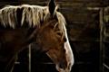 Картинка Electric horse, морда, лошадь, конь