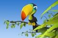 Картинка Тукан, птица, ветка, листочки