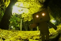 Картинка Danboard, danbo, box, robot, toy, парк, свет, глаза, ужас, листва