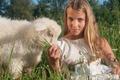 Картинка девочка, лето, овца