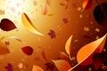Картинка осень, свет, клен, листопад, обои, листья