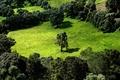 Картинка Поле, деревья, зелень