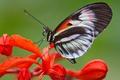 Картинка крылья, мотылек, растение, бабочка, насекомое, цветок