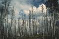 Картинка forest, sky, trees, wood, cloud, autumn, clouds, tree