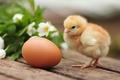 Картинка цыпленок, птенец, яйцо