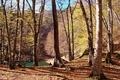 Картинка forest, деревья, leaves, autumn, озеро, trees, Nature, water, листопад, осень, лес