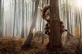 Картинка Там где живут чудовища, монстр, лес, дерево