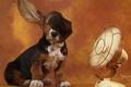 Картинка вентилятор, уши, Бассет, basset hound