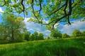 Картинка лето, жара, трава, деревья