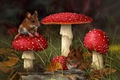 Картинка гриб, трава, лес, арт, мухомор, мышка, CARL ANDREW WHITFIELD