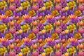 Картинка цветок, крокус, весна, арт, фон, текстура