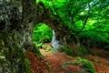 Картинка дерево, заросли, лес, листья