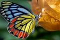 Картинка цвет, краски, мотылек, природа, бабочка, осень, листья