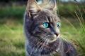 Картинка трава, глаза, взгляд, морда, природа, серый, Кот