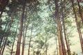 Картинка sky, forest, tree