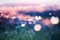 Картинка цветы, огни, bokeh