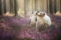 Картинка друзья, собаки, лес