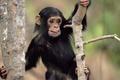 Картинка удивление, животные с животными, мордаха, обезьяна